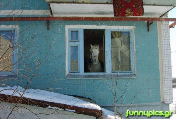 Κατοικίδιο Άλογο